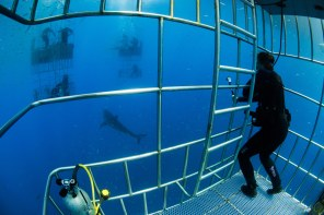A look inside a cage at 30-feet below the surface. © Nicole S. Young — nicolesy.com