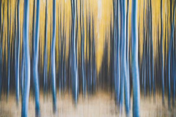 I used a slower shutter speed (1/8 sec) and photographed this with an up-down sweeping motion to blur the trees.