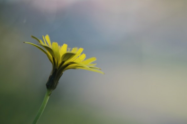 I used a wide aperture (f/2.4) to blur everything except the flower in this photo.