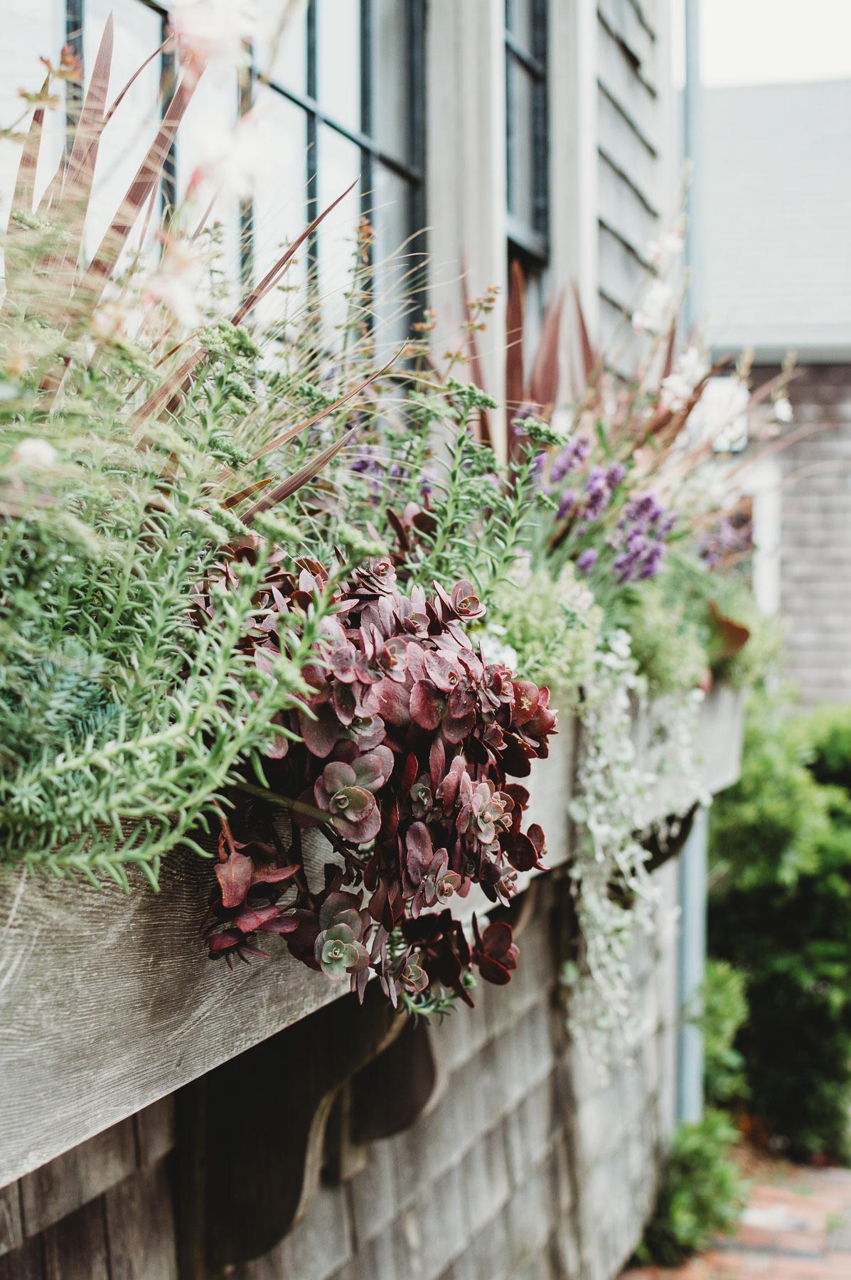 Downtown Nantucket Flower Box | Nicole Victory Design