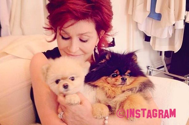 Sharon Osbourne Spends £230k-A-Year Flying Her Dogs FIRST CLASS!!
