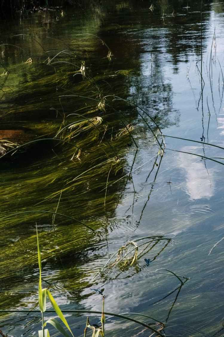 green grass on water