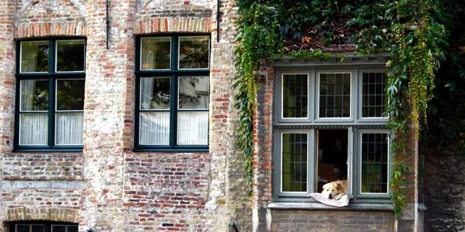 Ein schlafender Hund in einem Fenstersims - Flandern Rundfahrt