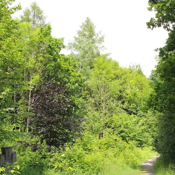 sehenswuerdigkeiten-muehlhausen-Unstrut-Hainich--thueringen-reisetipps-deutschland-unesco-welterbe-nationalpark-hainich-mischwald