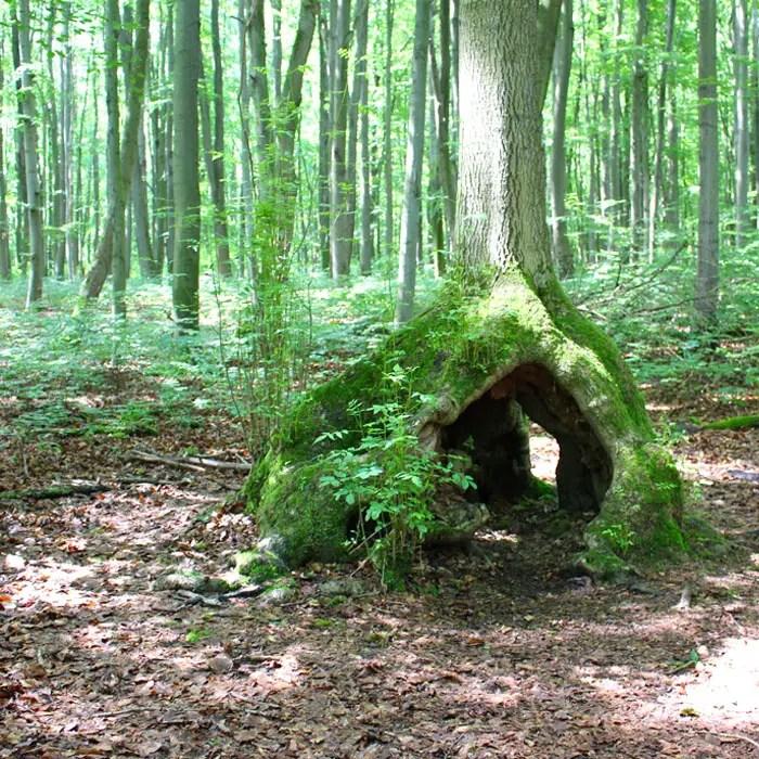 sehenswuerdigkeiten-muehlhausen-Unstrut-Hainich--thueringen-reisetipps-deutschland-unesco-welterbe-nationalpark-hainich-moosfee