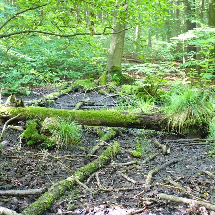 sehenswuerdigkeiten-muehlhausen-Unstrut-Hainich--thueringen-reisetipps-deutschland-unesco-welterbe-nationalpark-hainich-schwemmlandschaft