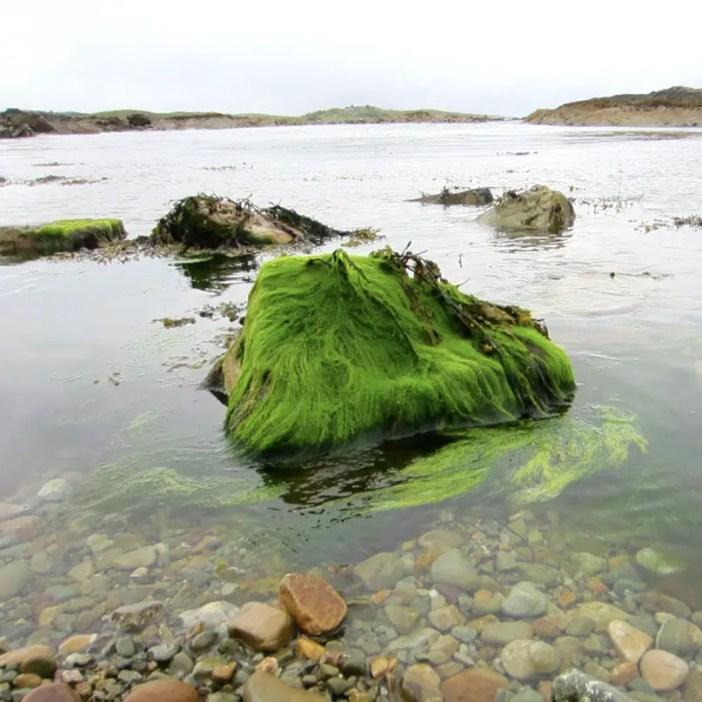 Rundreise-irland-reisetipps-irland-algen