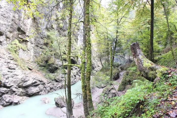 sehenswuerdigkeiten-dornbirn-reisetipps-vorarlberg-reisetipps-oesterreich-rappenlochschlucht-baumstumpf