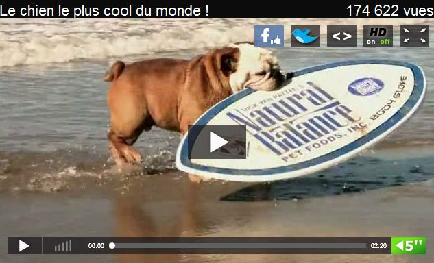 video chien skimboard