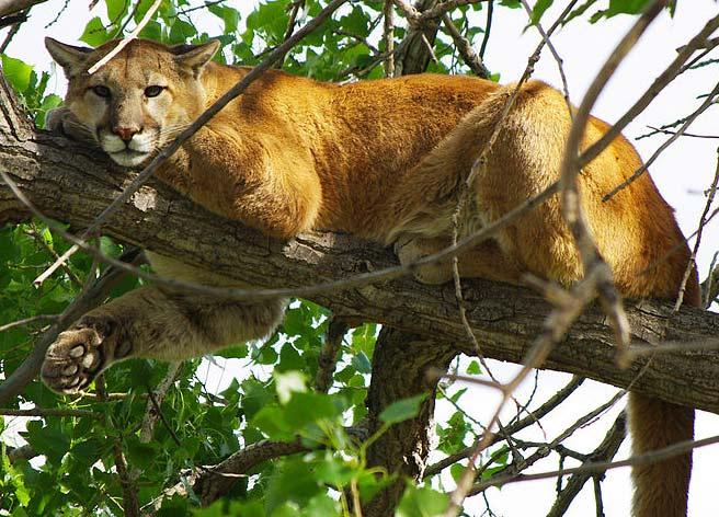 Wild Live Cats