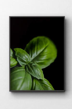 Bazylia Fotografia kulinarna obraz na ścianę