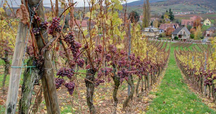 Le vin est reconnu comme patrimoine culturel gastronomique et paysager de la France