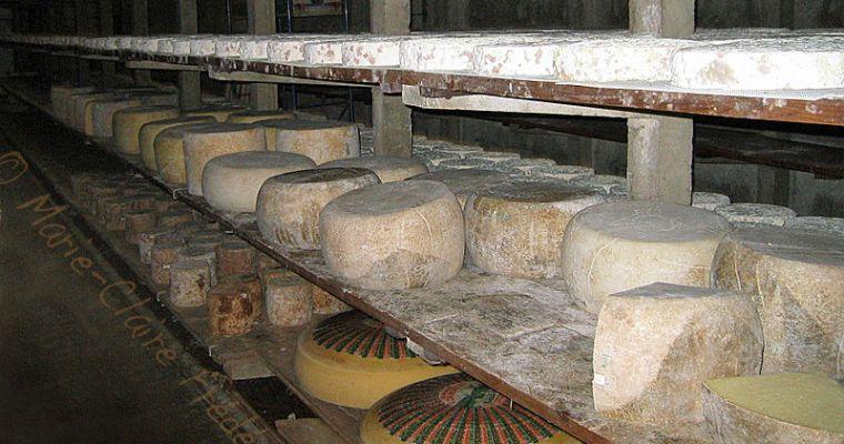 Les fromages au lait cru ne sont ni risqués ni dangereux