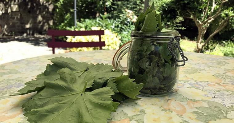 Comment surir les feuilles de vigne pour faire des dolma