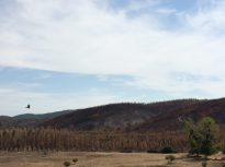 categoriaproblemas_vuelo de pajaro sobre paisaje forestal_ConsueloBiskupovic