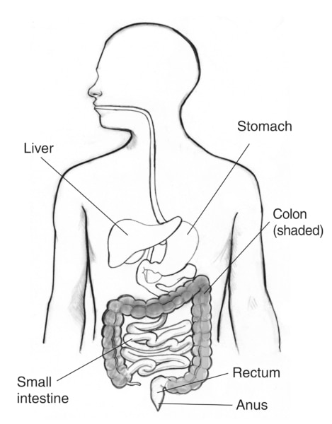 Picture Of Digestive System With Labels : picture, digestive, system, labels, Digestive, Tract, Labels, Pointing, Liver,, Stomach,, Small, Intestine,, Colon,, Rectum,, Media, Asset, NIDDK