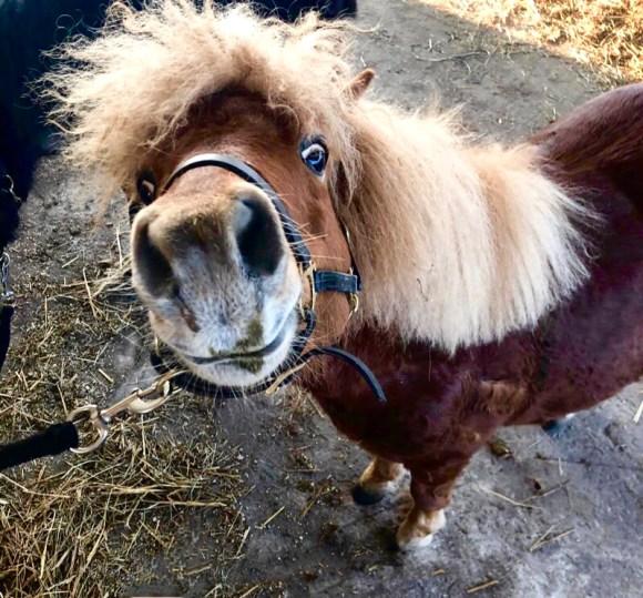 Ponyzwerge