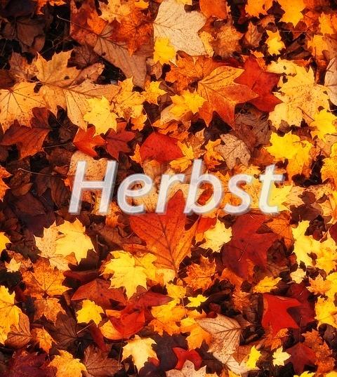 Jesień po niemiecku