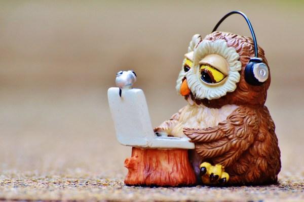 owl-947768_1920