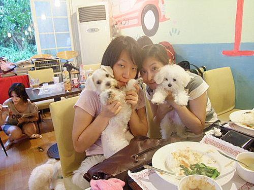 寵物餐廳│新北汐止美食│愛狗夢樂園(提供寵物餐/寵物游泳) - 捏捏媽Natasha。食在遊趣