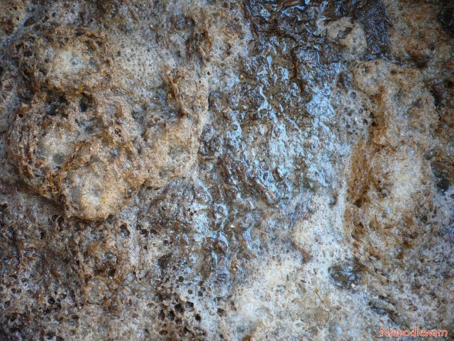 Fermentująca gnojówka zodchodów ptasich. Fot.Niepodlewam