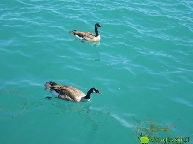 Guano może mieć różne pochodzenie, np.odptaków wodnych. Popularne jest też guano nietoperzy. Fot.Niepodlewam