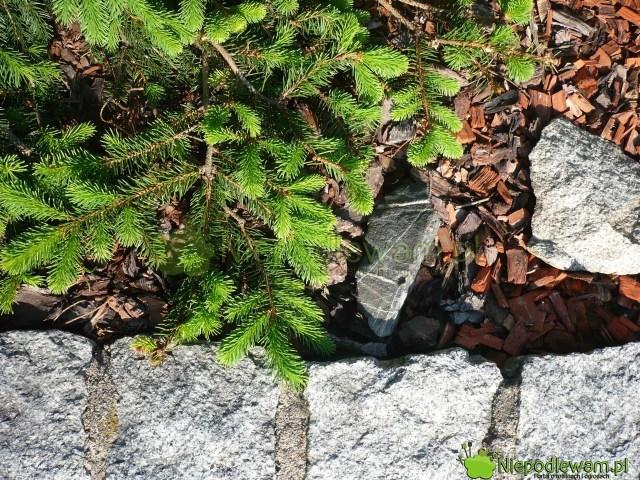Granit tokamień, któryzakwasza ziemię wogrodzie. Fot.Niepodlewam