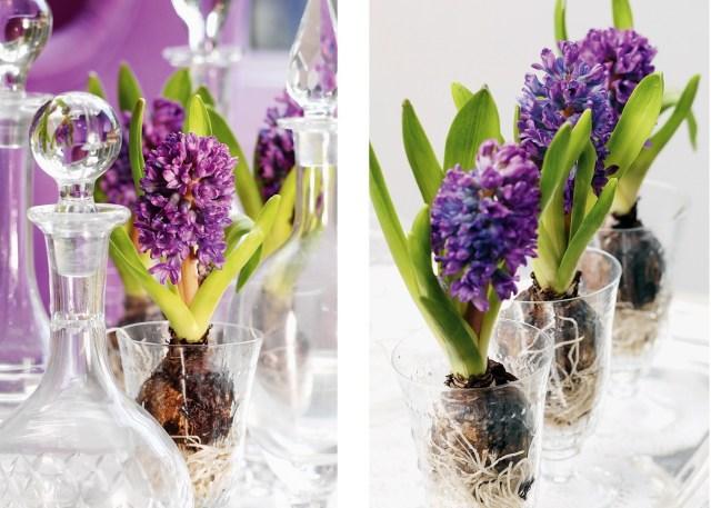 Fot. Flower Council of Holland/thejoyofplants.co.uk