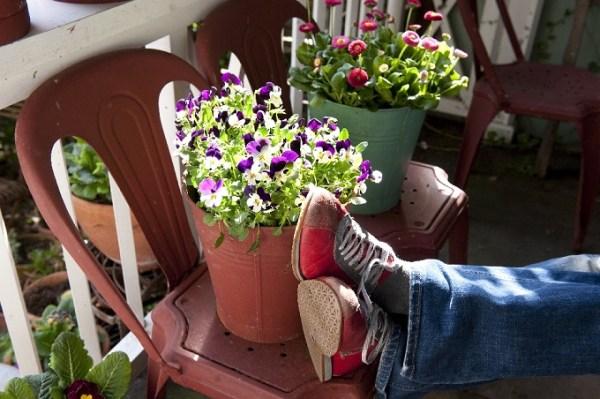 Na zacienionym balkonie dobrze rosną np.bratki. Fot.Flower Council of Holland/thejoyofplants.co.uk