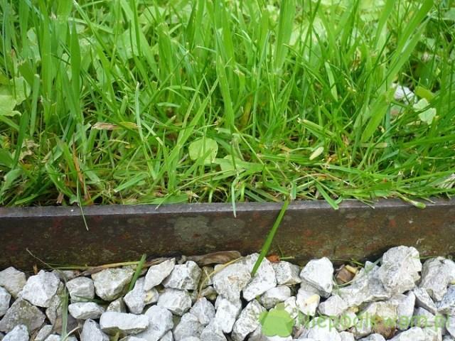 Listwa metalowa oddzielająca trawnik odżwirowej ścieżki. Fot.Niepodlewam