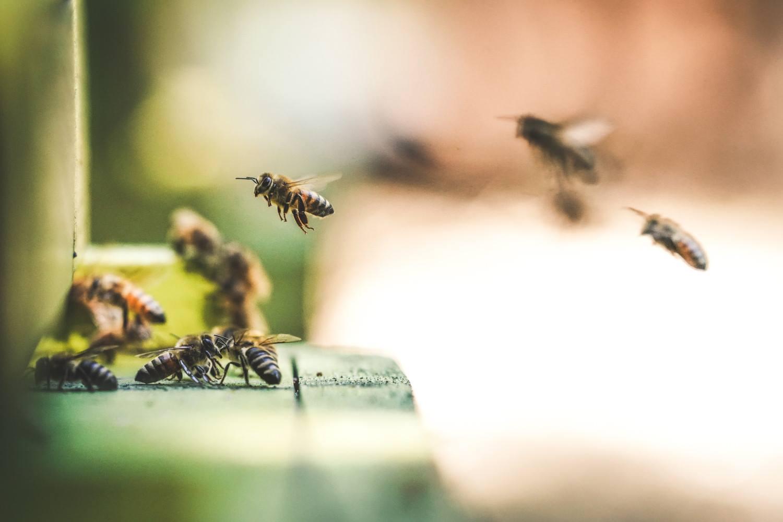 Pozycja seksualna czarnej pszczoły