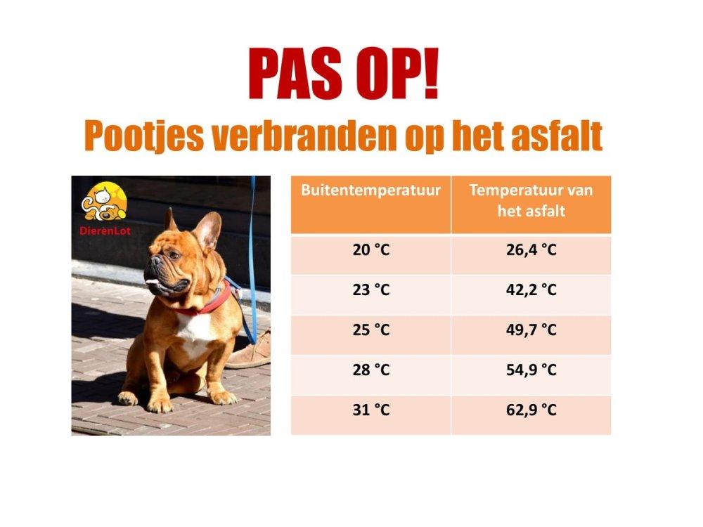 wandel niet met hond op warm asfalt