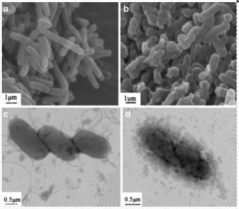 bakteria