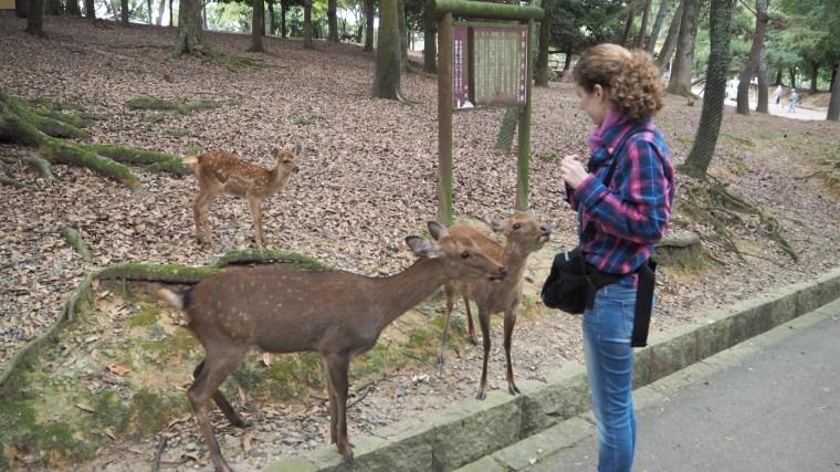 Dear park in Nara