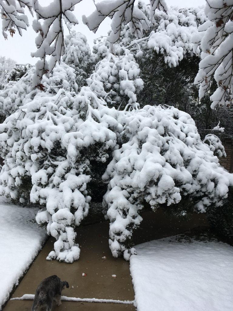 Rare Southern Snow in December