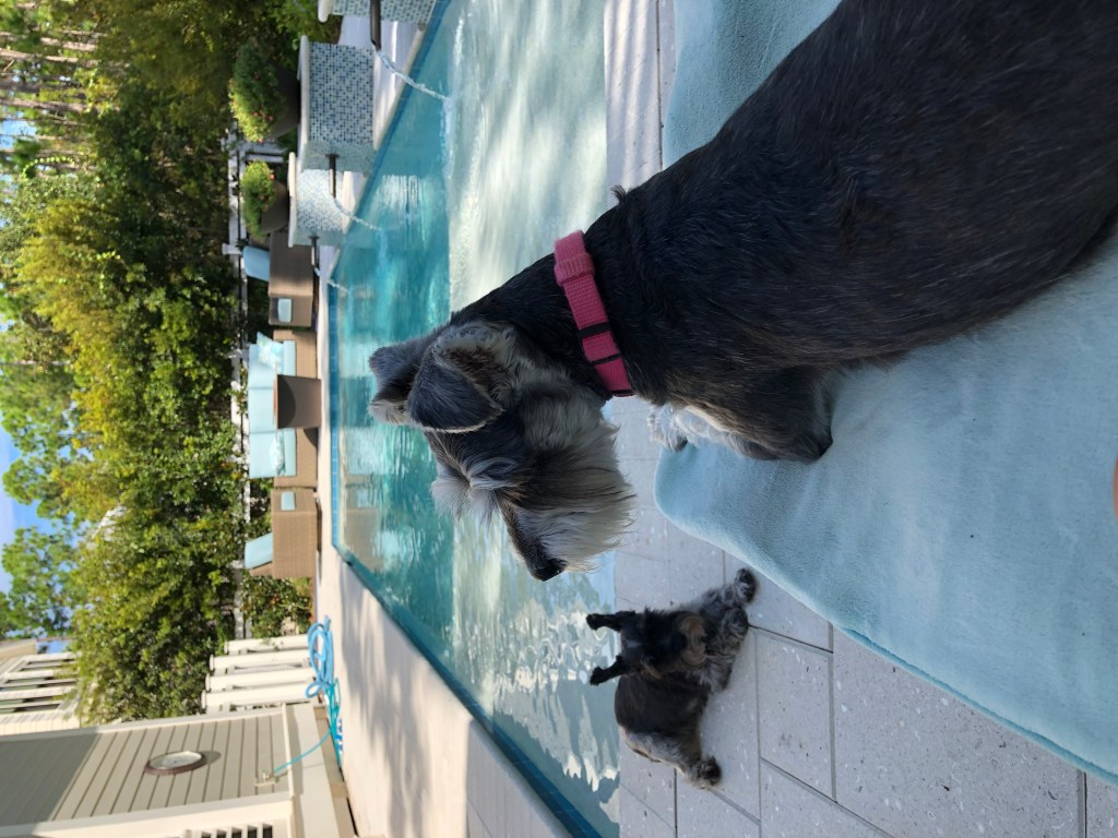 Lounging out by the pool after swimming lessons