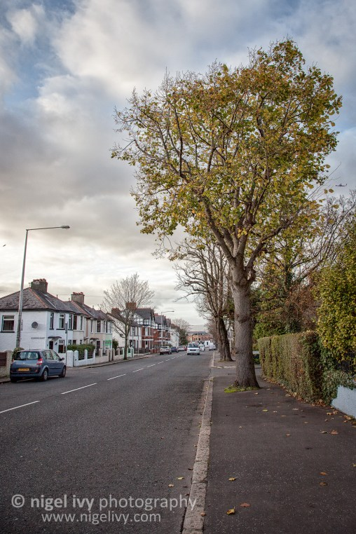 Here's a shot from a road near where I live in East Belfast. There's still a few leaves on the trees, but winter is here - it's been a cold week!