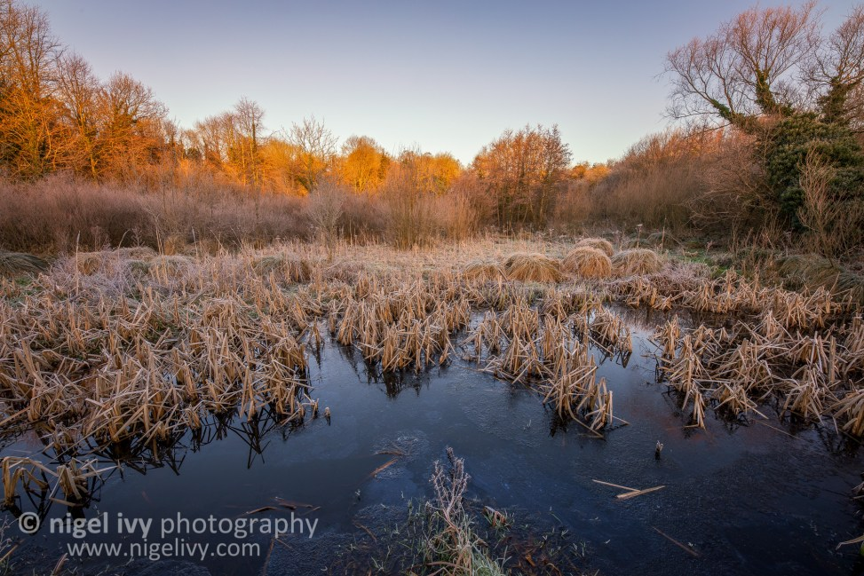 This morning I went out for sunrise and took Jax with me. It's the first time I've taken him with me on a shoot. Here's a shot of a frosty pond at Lagan Meadows.