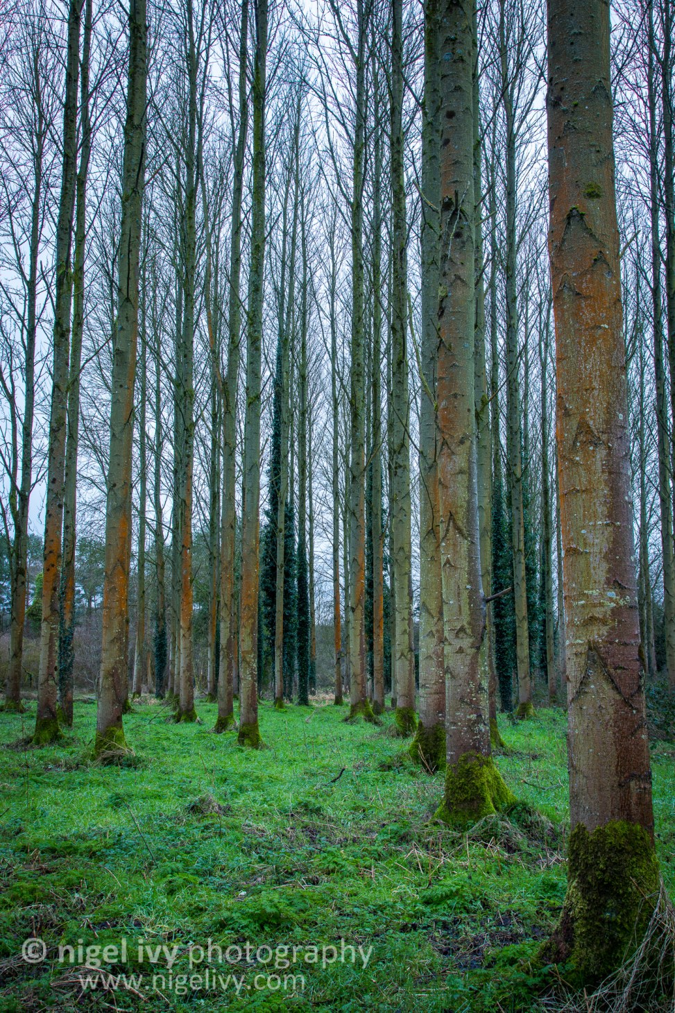 I went out to Lagan Meadows for sunset tonight, but it was raining so I headed into the forest and found this scene.