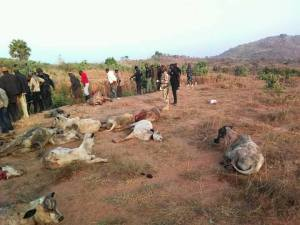 'Getting Messier': Militia Group Attacks Fulani Herdsmen, Scores Killed And Cows Slaughtered