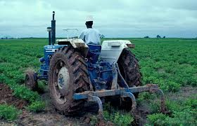 Mixed Farming in Nigeria: All You Need to Know
