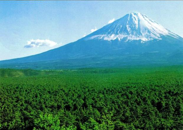 The Japanese forest close to Fuji Mountains where lovers die
