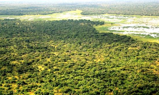 Buy Land In Nigeria