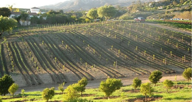 Land Tenure System