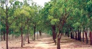 Rodipe tasks Govt on Tree Planting