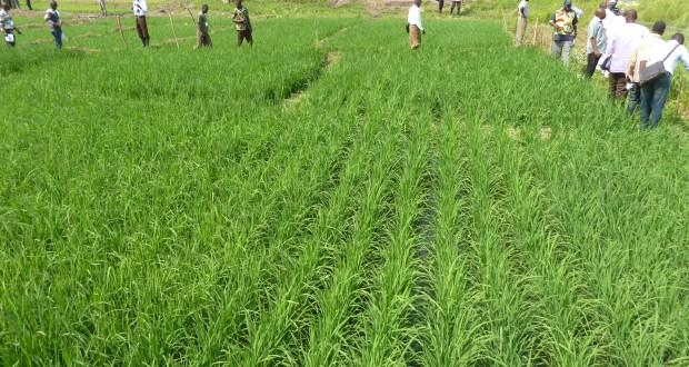 road rehabilitation- Bornu farmers beckons on government