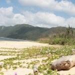 南風見田の浜<沖縄県・西表島>