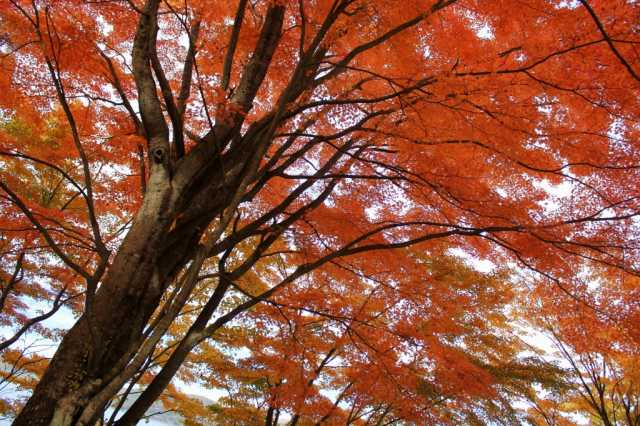 1 thousand leaf<山梨県>