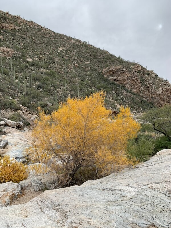 short hikes in Tucson