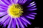 [:bg]Фотография на цветя[:en]Flower photography[:]